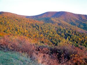 Skyline Drive Leaves 1